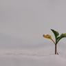 Taller de financiación de impacto para empresas sociales